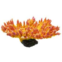 Underwater Treasures Acropora Coral - Sunset