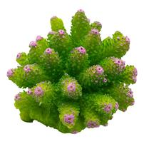 Underwater Treasures Cauliflower Coral - Green