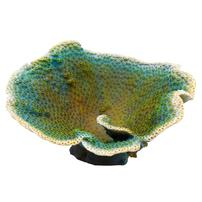 Underwater Treasures Dinner Plate Coral - Green