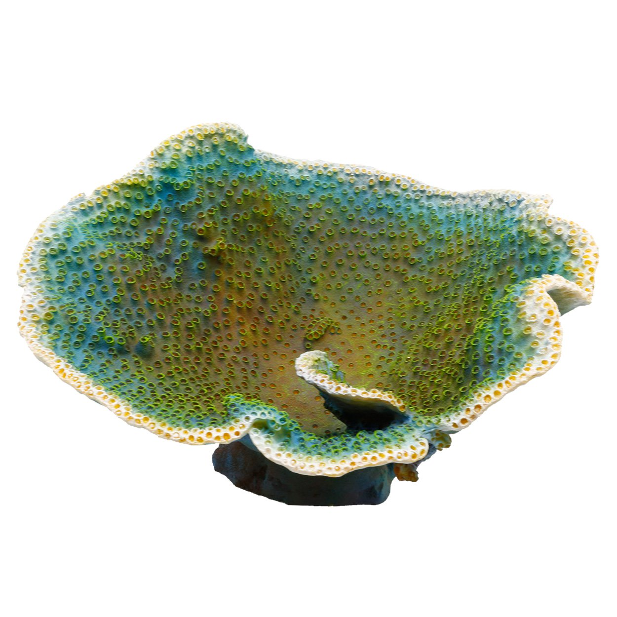 Underwater Treasures Dinner Plate Coral - Green
