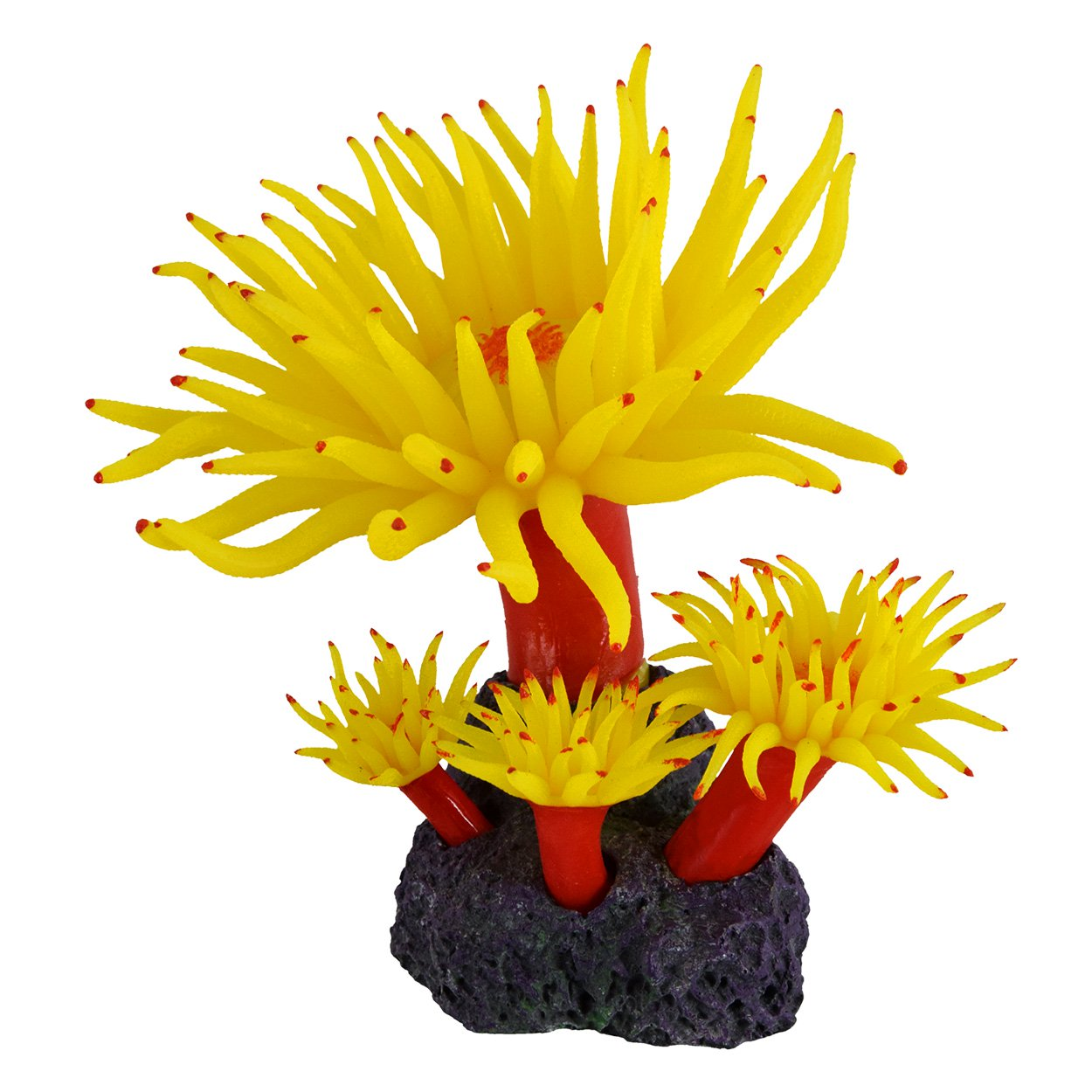 Underwater Treasures Duncan Coral - Sunset