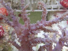 Kenya Tree Coral: Green
