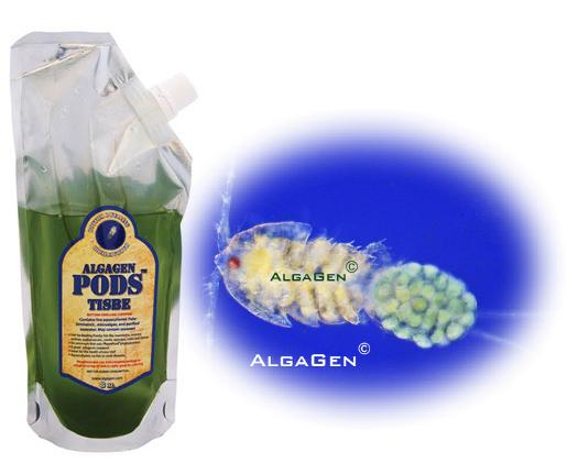 AlgaGen Copepods - ReefPods Tisbe 16 oz