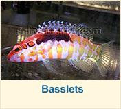 Basslets