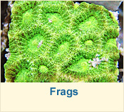 Frags