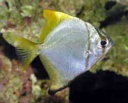 Mono fish for Opah fish price