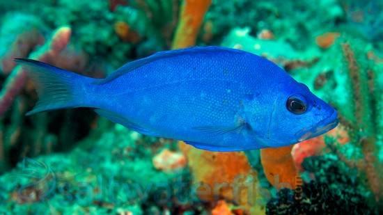 www.saltwaterfish.com