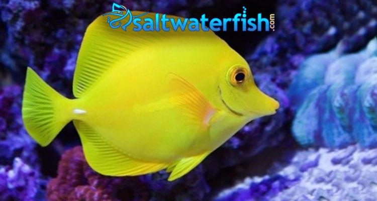 Reef fish marine fish coral aquarium supplies more for Where to buy saltwater fish